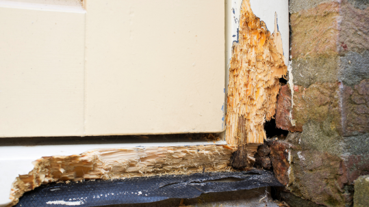 Wood Rot Example - Blog Featured Image